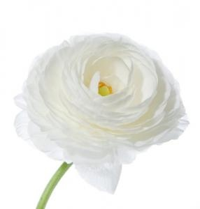 Дешевые цветы в новом уренгое