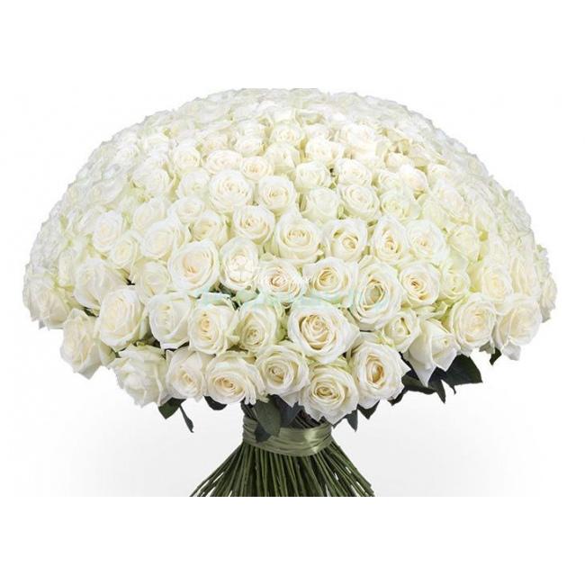 Купить белых розы с доставкой по беларуси, где купить букет